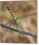 Green Dragonfly On Twig Wood Print