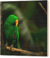 Green Eclectus Parrot Male Wood Print