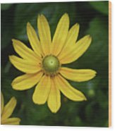 Green Eyed Daisy Wood Print