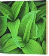 Green False Hellebore Wood Print