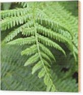 Green Fern 2 Wood Print