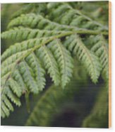 Green Fern Wood Print