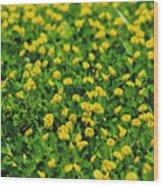 Green Field Of Yellow Flowers 1 Wood Print