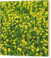 Green Field Of Yellow Flowers 2 1 Wood Print