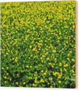 Green Field Of Yellow Flowers Wood Print