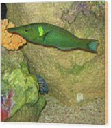 Green Fish Wood Print