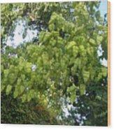 Green Fizalis Plant Wood Print