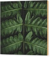 Green Foilage Of Indonesia Wood Print