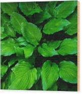 Green Foliage Wood Print