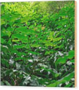 Green Foliage Wood Print