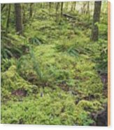 Green Foliage On The Forest Floor Wood Print