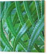 Green Forest Fern Fronds Art Prints Baslee Troutman Wood Print