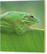 Green Frog Whitelips Wood Print