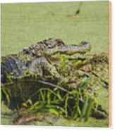 Green Gator Wood Print
