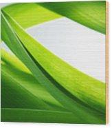 Green Grass Background Wood Print