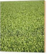 Green Grass Wood Print