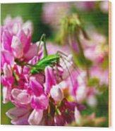 Green Grasshopper On Pink Flowers Wood Print