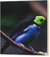 Green Headed Bird Wood Print