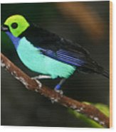 Green Headed Bird On Branch Wood Print