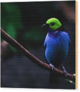 Green Headed Bird Profile Wood Print