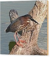 Green Heron 1 Wood Print