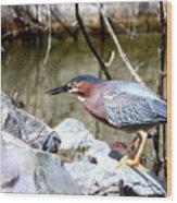 Green Heron . 7d614 Wood Print
