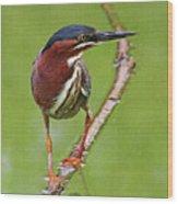 Green Heron At Gilbert Riparian Preserve Wood Print