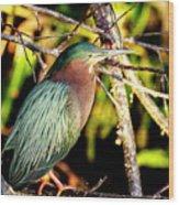 Green Heron At Green Cay Wetlands Wood Print