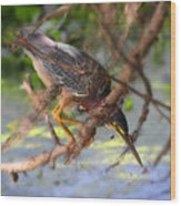 Green Heron Brazos Bend State Park Wood Print