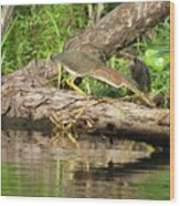 Green Heron Fishing 2 Wood Print