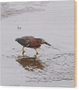 Green Heron Fishing Wood Print
