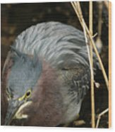 Green Heron Hunting Wood Print