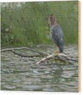 Green Heron In Water Wood Print