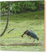 Green Heron Lunch Wood Print