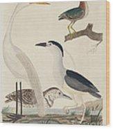 Green Heron, Night Heron, Young Heron, And Great White Heron Wood Print