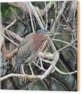 Green Heron On A Branch Wood Print