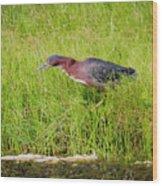 Green Heron On The Hunt Wood Print