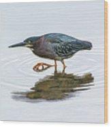 Green Heron Stalking Prey Wood Print