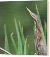 Green Heron Watches Wood Print