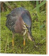 Green Heron With Prey Wood Print