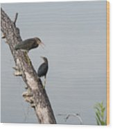 Green Herons At The Water Cooler Wood Print