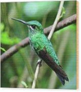 Green Crowned Brilliant Hummingbird Wood Print