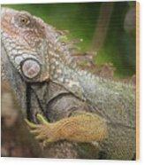 Green Iguana Costa Rica Wood Print