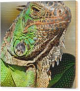Green Iguana Series Wood Print