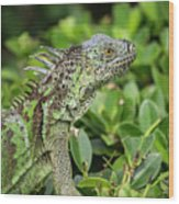 Green Iguana Vertical Wood Print