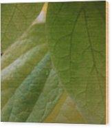 Green In Vein Wood Print