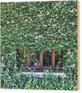 Green Ivy Window  Wood Print