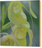 Green Lady Slipper Orchid Wood Print