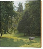 Green Land Wood Print