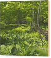 Green Landscape Of Summer Foliage Wood Print